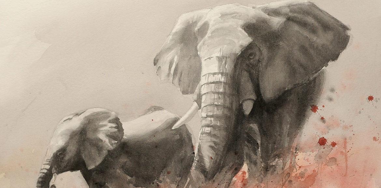 Ivory-A sad story