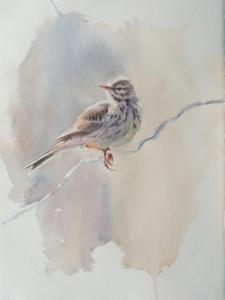 Ängspiplärka Akvarell28x38cm